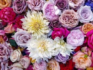 Собирать пазл Розы и георгины онлайн