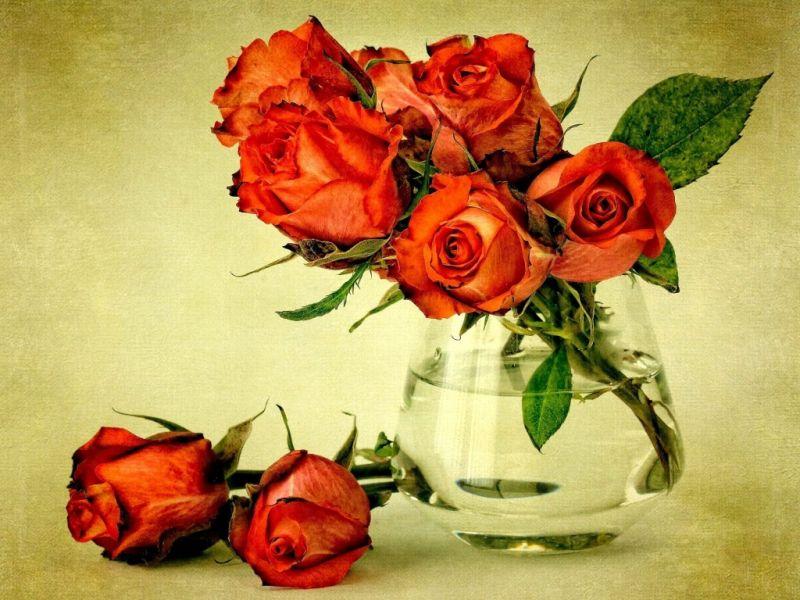 Пазл Собирать пазлы онлайн - Розы красные