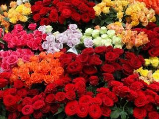 Собирать пазл Розы на продажу онлайн