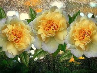 Собирать пазл Розы на стекле онлайн
