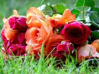 Собирать пазл Розы на траве онлайн