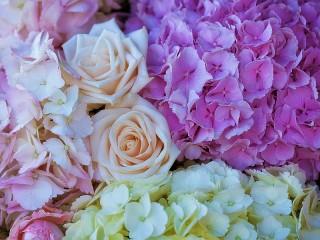 Собирать пазл Розы среди гортензий онлайн