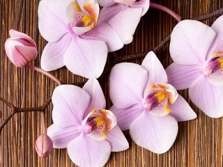 Собирать пазл Розовая орхидея онлайн