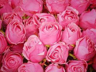Собирать пазл Розовые бутоны онлайн