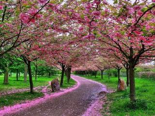 Собирать пазл Розовые деревья онлайн