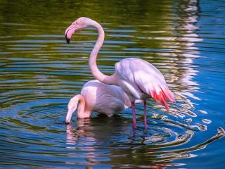 Собирать пазл Розовые фламинго онлайн