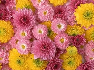 Собирать пазл Розовые и жёлтые онлайн
