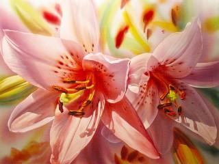 Собирать пазл Розовые лилии онлайн