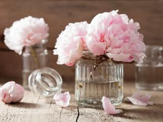 Собирать пазл Розовые пионы онлайн