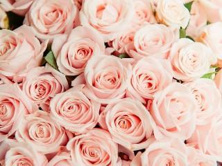 Собирать пазл Розовые цветы онлайн