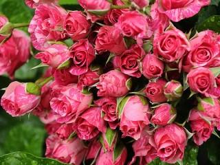 Собирать пазл Розовый букет онлайн