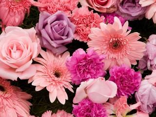 Собирать пазл Розовый и лиловый онлайн