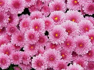 Собирать пазл Розовый ковёр онлайн