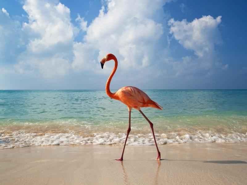 Пазл Собирать пазлы онлайн - Розовый фламинго
