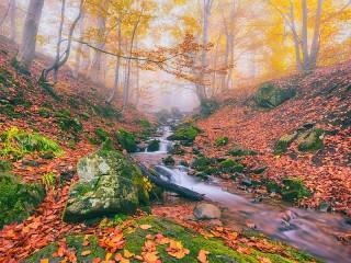 Собирать пазл Ручей в лесу онлайн