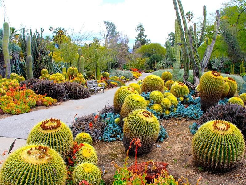Пазл Собирать пазлы онлайн - Сад кактусов
