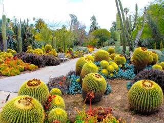 Собирать пазл Сад кактусов онлайн