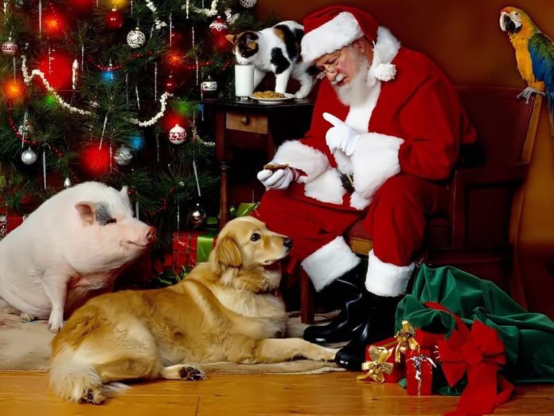Пазл Собирать пазлы онлайн - Санта и животные