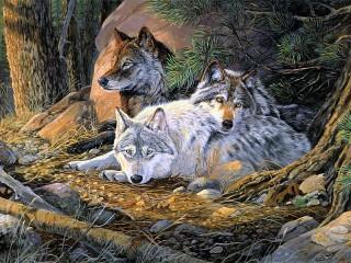 Собирать пазл Семейство волков онлайн