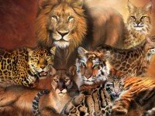 Собирать пазл Семейство кошачьих онлайн