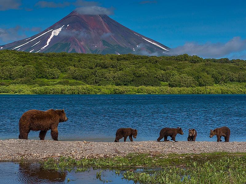 Пазл Собирать пазлы онлайн - Семья медведей