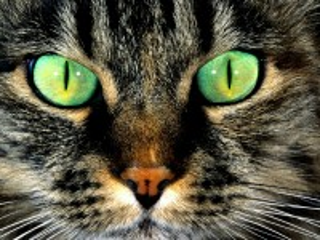 Собирать пазл Серый кот онлайн