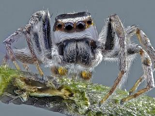 Собирать пазл Серый паук онлайн