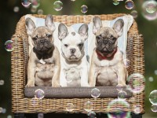 Собирать пазл Щенки и пузыри онлайн