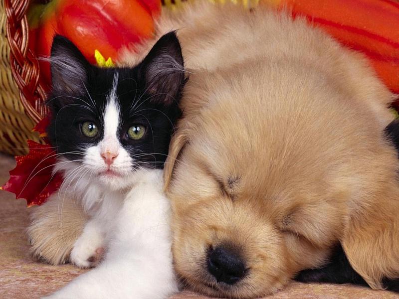 картинки на тему котята и щенята города достопримечательности посетить