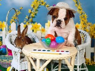 Собирать пазл Щенок и кролик онлайн