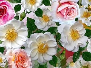 Собирать пазл Шиповник и розы онлайн