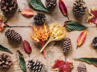 Собирать пазл Шишки и листья онлайн