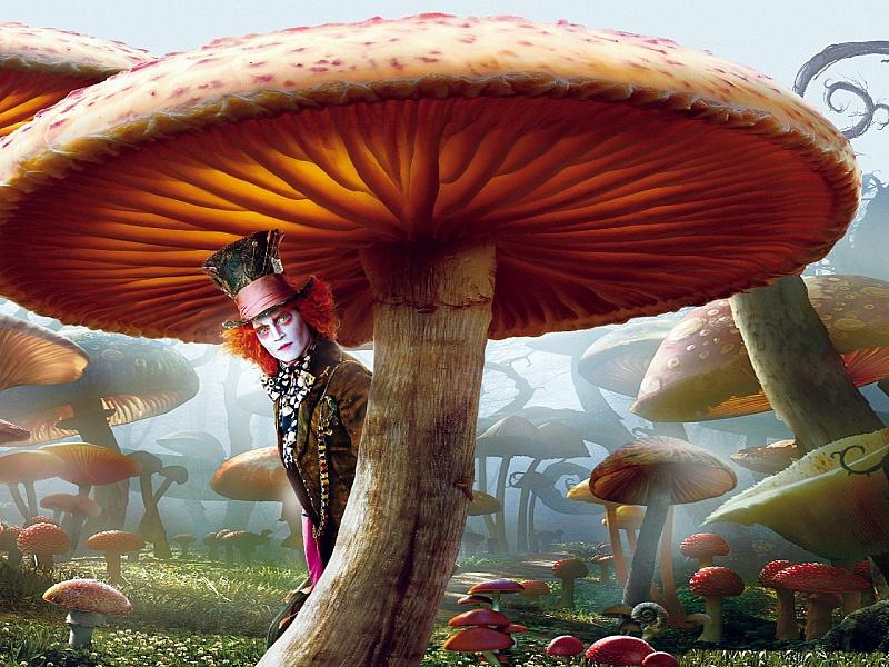 Пазл Собирать пазлы онлайн - Шляпник и грибы