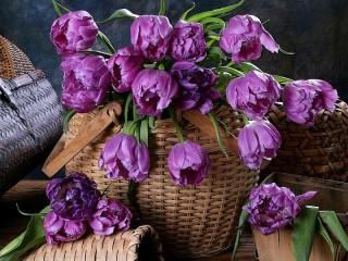 Собирать пазл Сиреневые тюльпаны онлайн