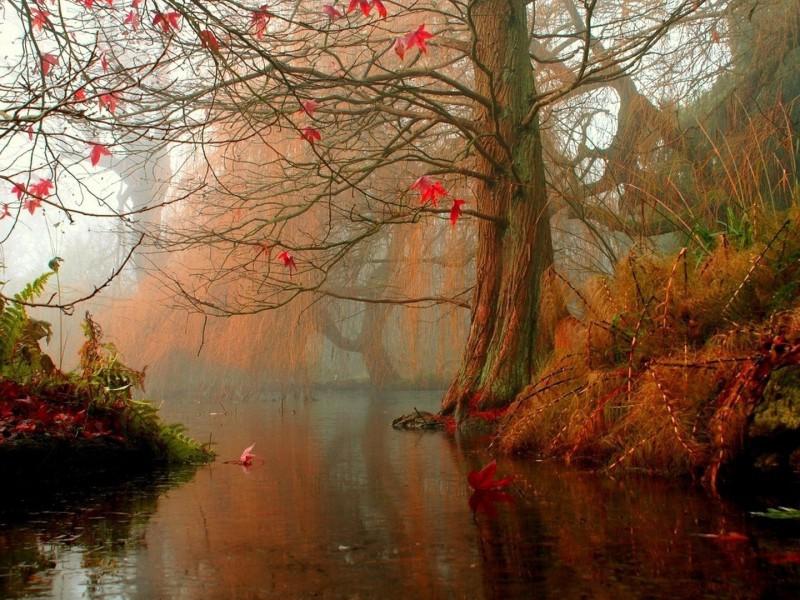 Пазл Собирать пазлы онлайн - Сказочный лес
