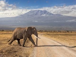 Собирать пазл Слон на фоне гор онлайн