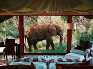 Собирать пазл Слон за окном онлайн