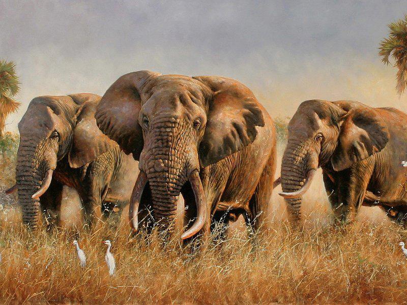 Пазл Собирать пазлы онлайн - Слоны