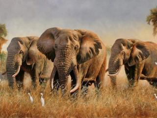 Собирать пазл Слоны онлайн