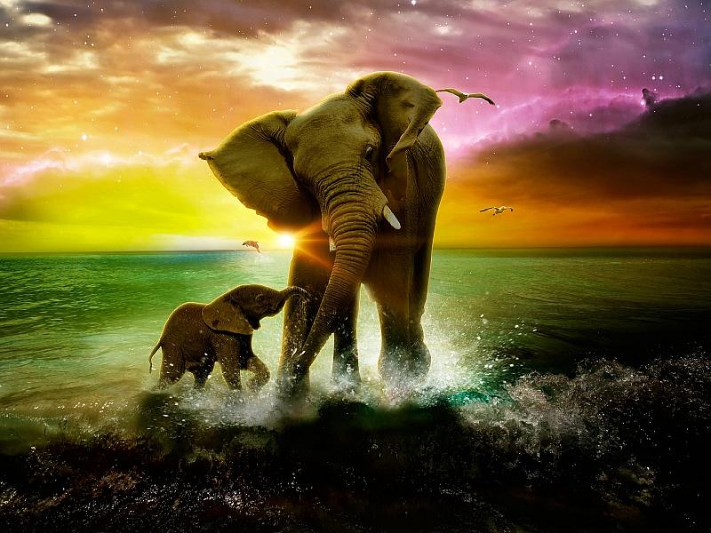 Пазл Собирать пазлы онлайн - Слониха и слонёнок