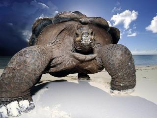 Собирать пазл Слоновая черепаха онлайн