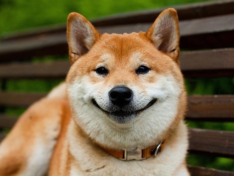Пазл Собирать пазлы онлайн - Собака-улыбака