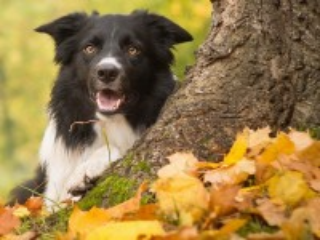 Собирать пазл Собака онлайн