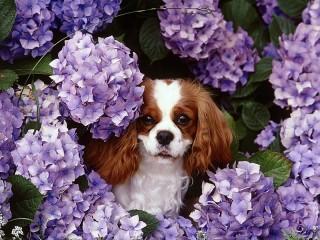 Собирать пазл Собака и цветы онлайн