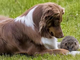 Собирать пазл Собака и ёжик онлайн