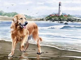 Собирать пазл Собака у моря онлайн