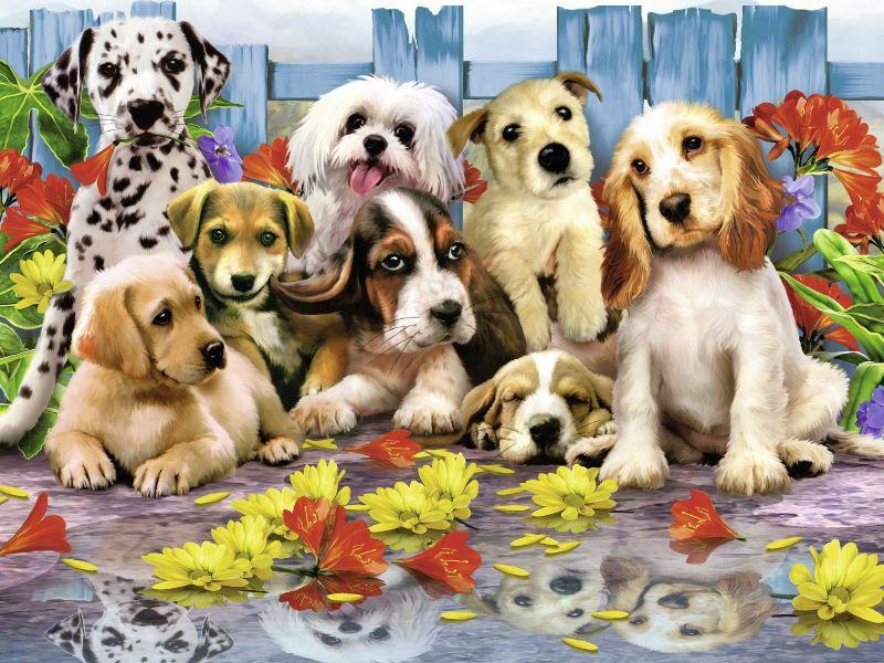 Пазл Собирать пазлы онлайн - Собаки