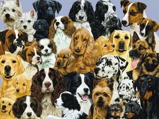Собирать пазл Собаки онлайн