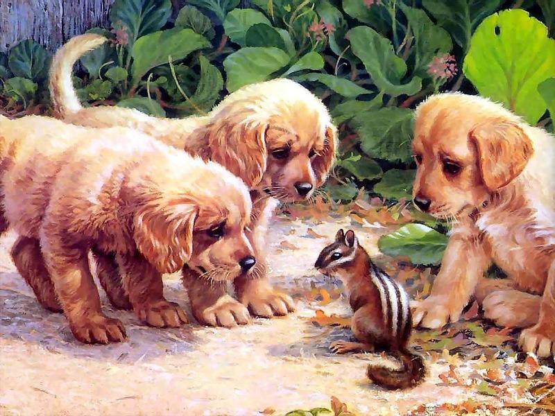 Пазл Собирать пазлы онлайн - Собаки и бурундук