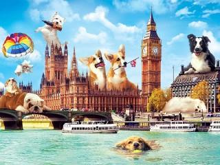 Собирать пазл Собаки в лондоне онлайн